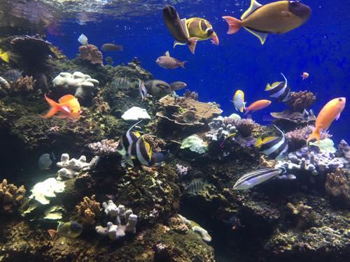 ワイキキ水族館 水族館 ハワイ ワイキキ ホノルル  魚
