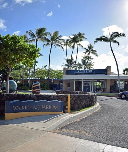 ワイキキ水族館 水族館 ハワイ ワイキキ ホノルル