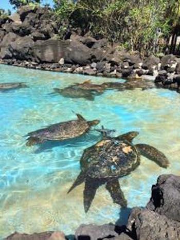 シーライフパーク ハワイ ホノルル 水族館