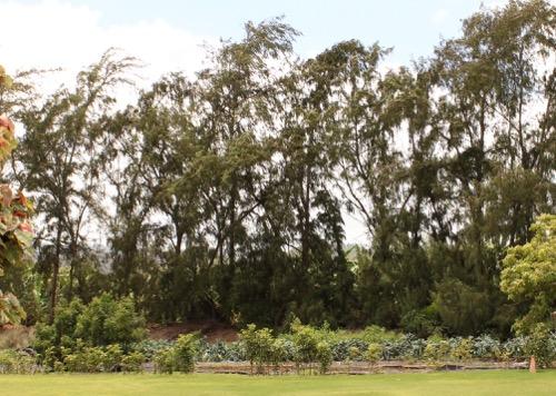 ハワイ ノースショア カフクファーム ファームツアー HAWAII NORTHSHORE KAHUKU FARM FARM TOUR