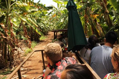 ハワイ ノースショア カフクファーム ファームツアー バナナ HAWAII NORTHSHORE KAHUKU FARM FARM TOUR