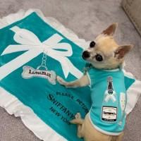 ハワイ発のラグジュアリーなワンちゃんグッズ専門店、ルナ・ブルーで愛犬へのハワイ土産探し!