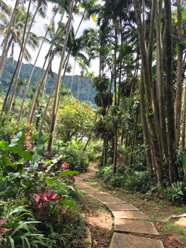 hawaii_waikiki_IMG_5867