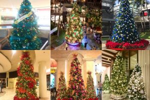 hawaii christmas tree waikikith_