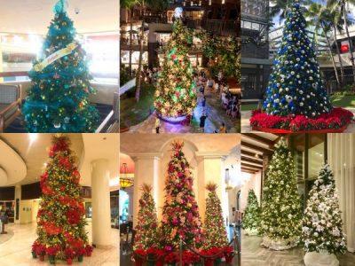 hawaii christmas tree waikikith_